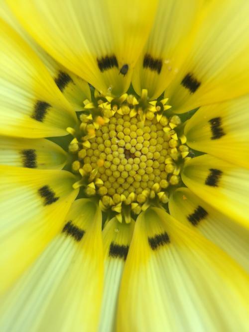 IP - flower