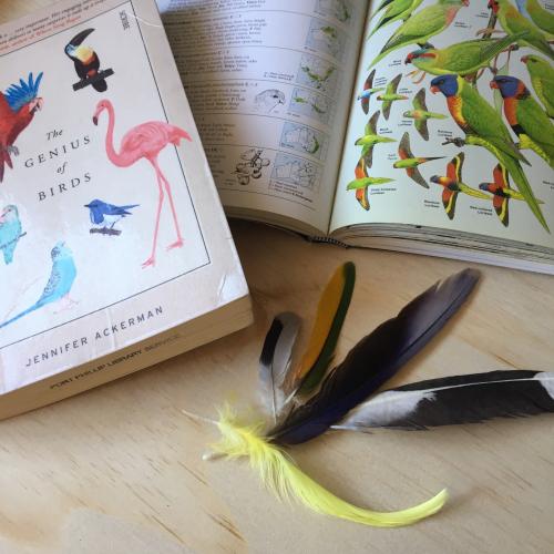 IP - Bird Books 1