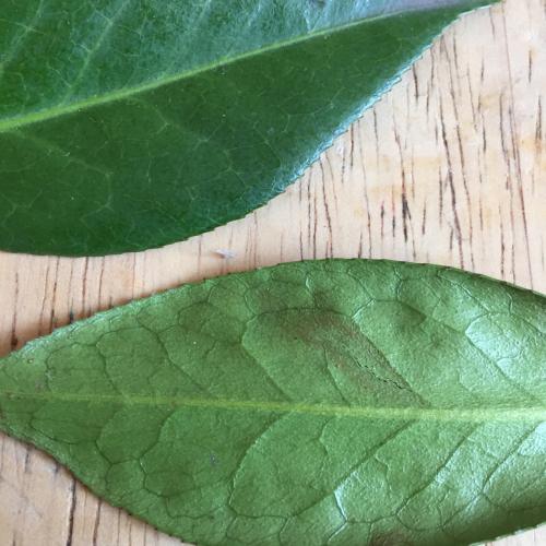 IP - Leaf 2