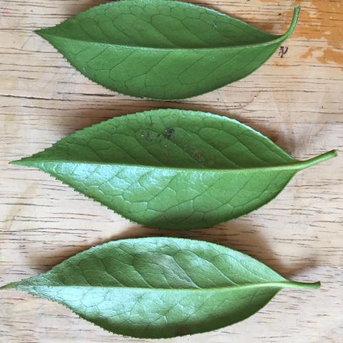 IP - Leaf 3