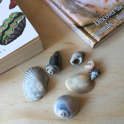IP - Shells 2