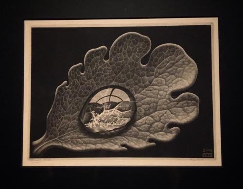 Ip -Escher 4