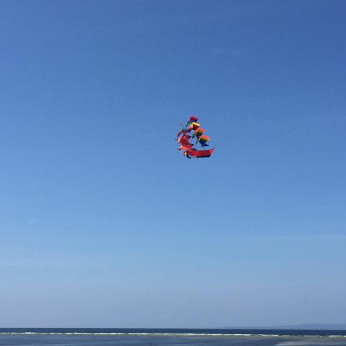 IP - Kite 1