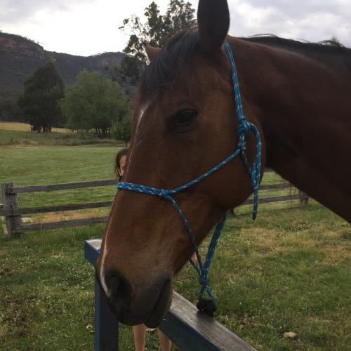 IP - Horse 3