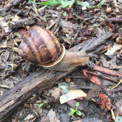 IP - A Snail's Pace 2